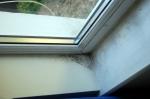 Mould June 2015 Living Room Window